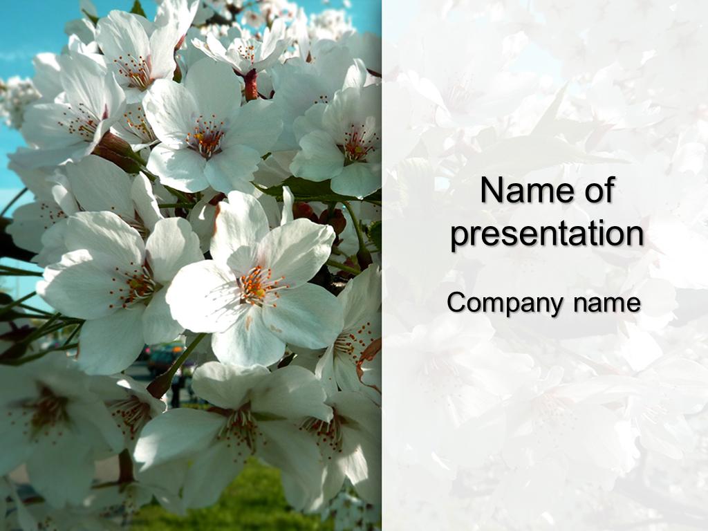 Free white sakura powerpoint template presentation