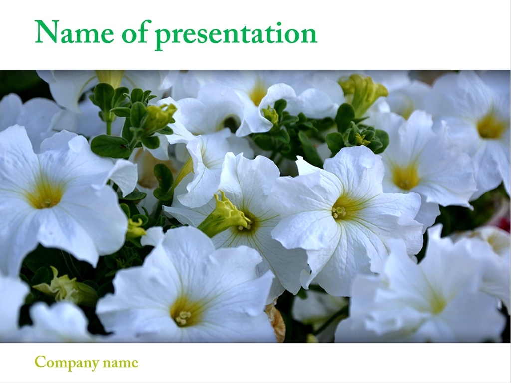 Free beautiful flowers powerpoint template Presentation